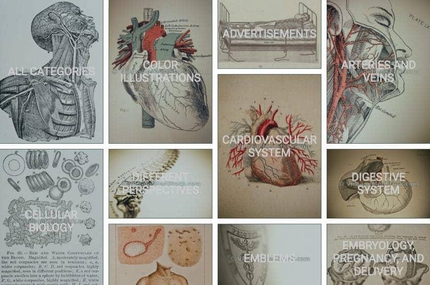 As Melhores fotografias da área Médica e sobre a (Covid-19) 16